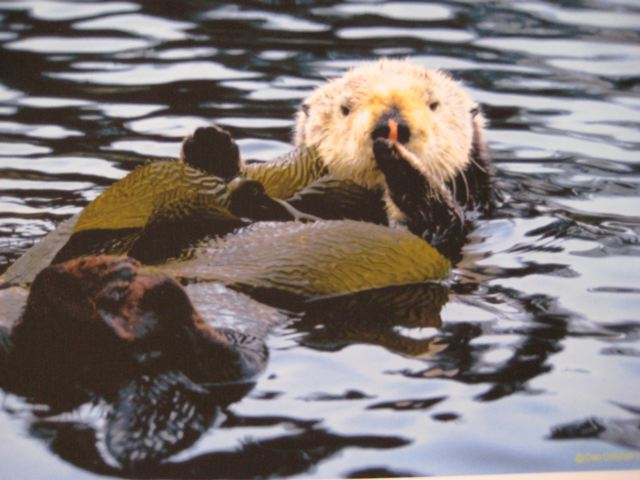 sea otters research paper Whether you're looking for facts about a specific species for a research paper or looking to have a little fun while learning more about southern sea otter.
