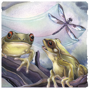 Insects & Amphibians
