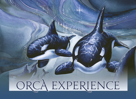 Orca Experience - Magnet