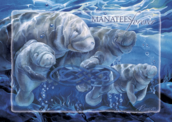 Manatees Forever - Magnet