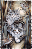 Tabby Or Not Tabby Large Prints (Click for options & image enlargement)