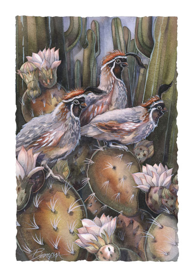 Quails / Desert Friends - Art Card