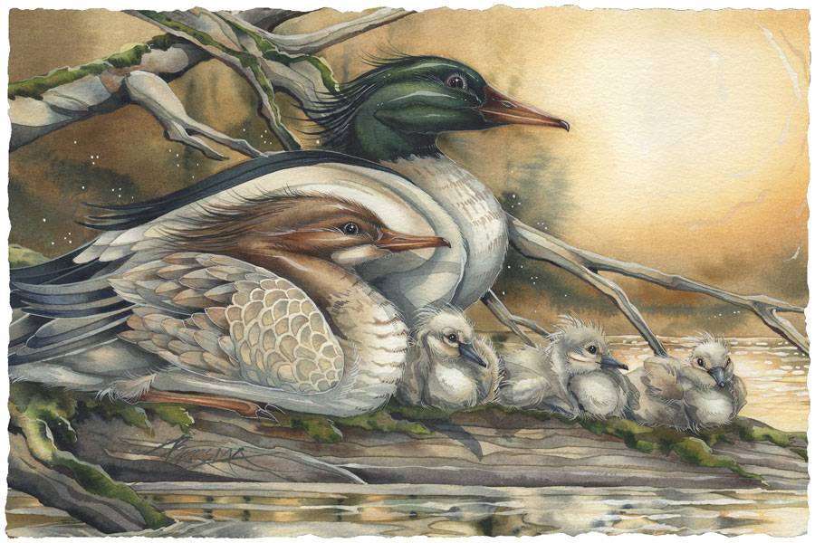 Ducks / A New Day Dawning - Art Card