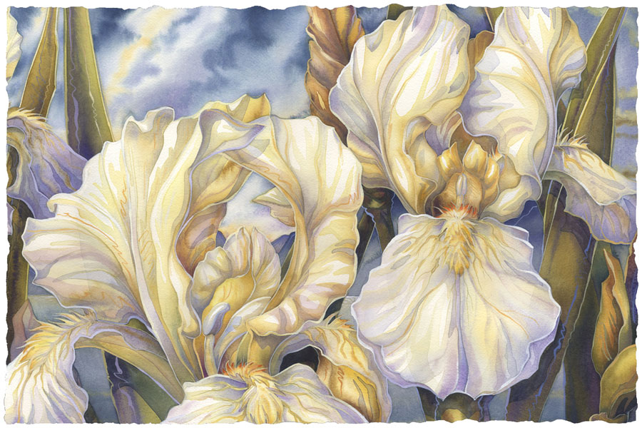 Irises / Summer Love - Art Card
