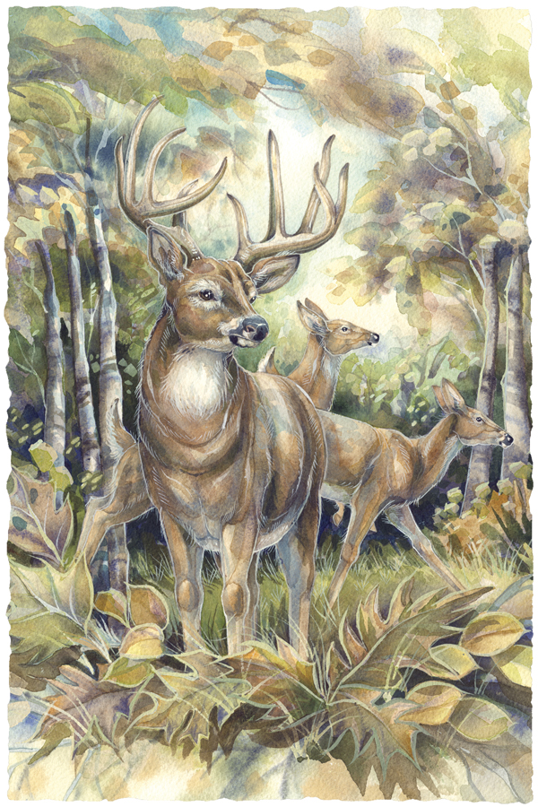 Woodland Wanderer- Prints