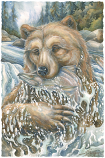 River Bear...Life Is An Adventure Small Prints (Click for options & image enlargement)