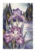 Irises / Lady Of The Lake - Art Card