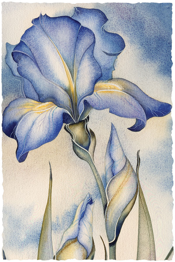 Sky Iris - Prints