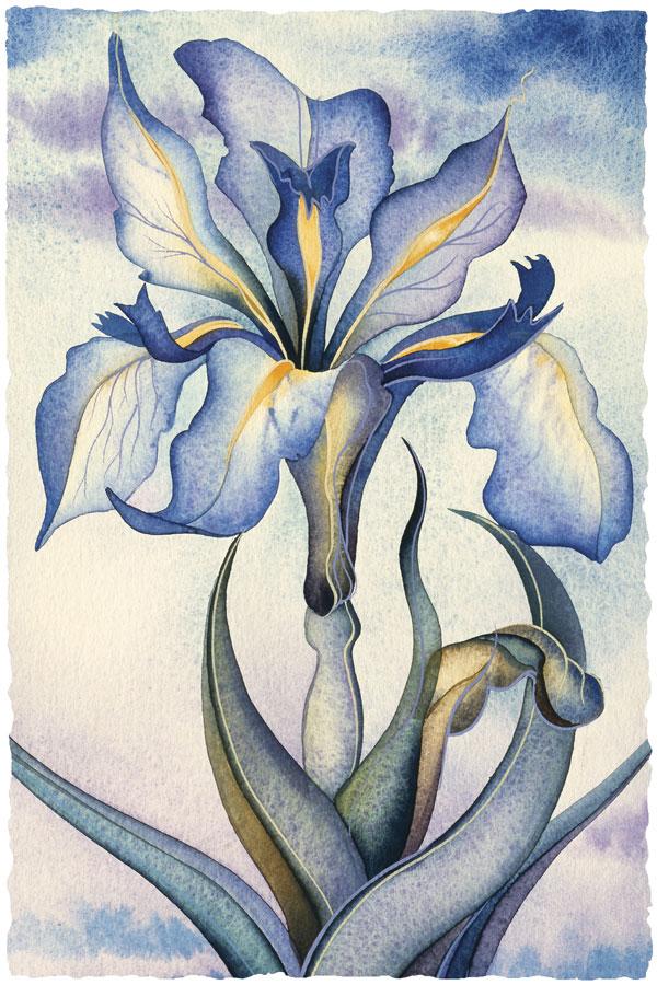 Dutch Iris - Prints