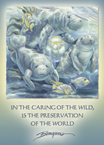 In The Caring Of The Wild... - Magnet