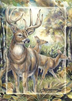Deer / Woodland Wanderer - Magnet