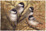Feathered Friends Small Prints (Click for options & image enlargement)