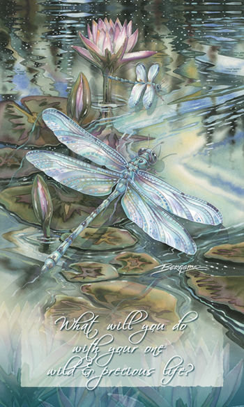Dragonflies / Wild & Precious Life - Mailable Mini