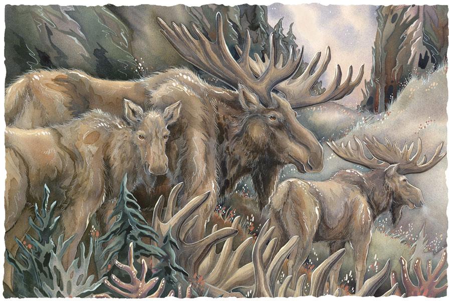 Moose / Moosin' Around - Art Card