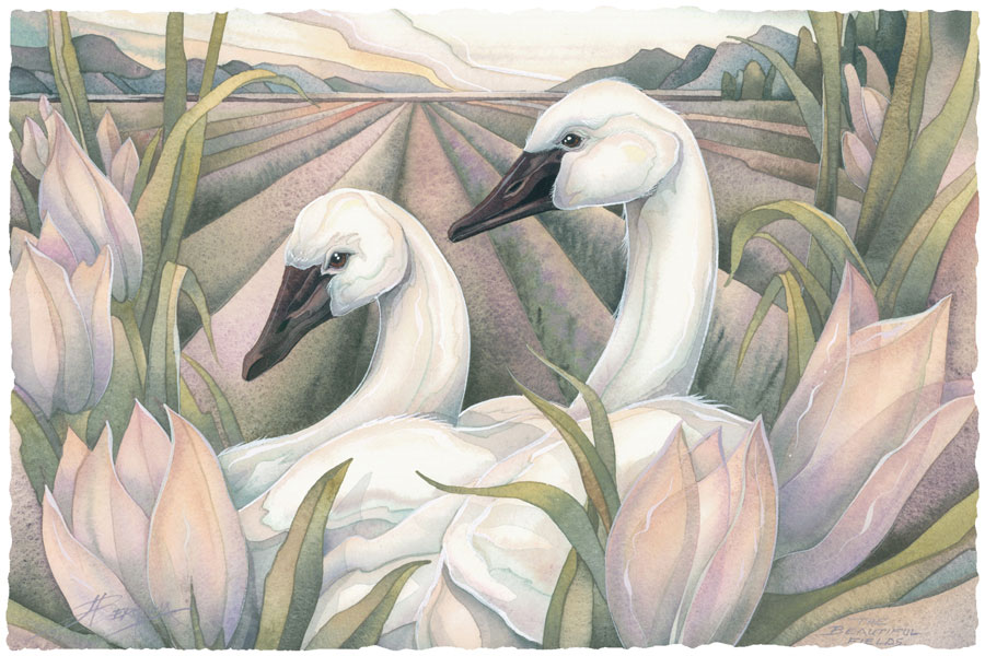 Swans / I Have Found The One Whom My Soul Loves - Art Card