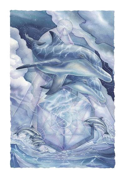 Dolphins / Dolphinity - Art Card