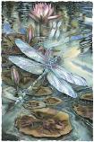 Wild & Precious Life Small Prints (Click for options & image enlargement)