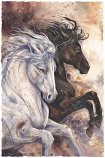 'Faithful & True' Small Prints (Click for options & image enlargement)